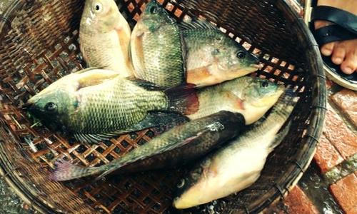 Những loại cá tốt cho sức khỏe bạn nên ăn